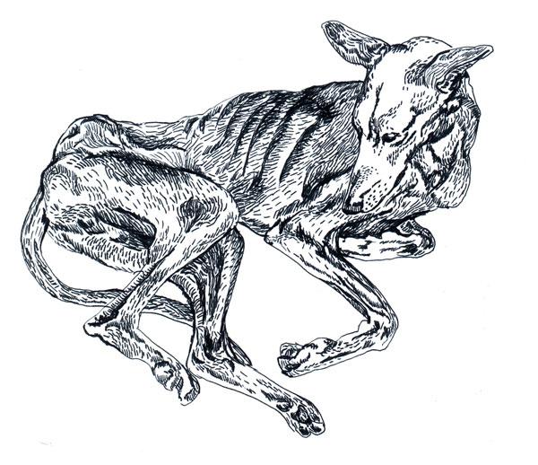 Black Diamond Dog Food Recall