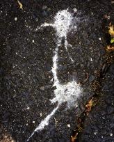 Wandering Egret